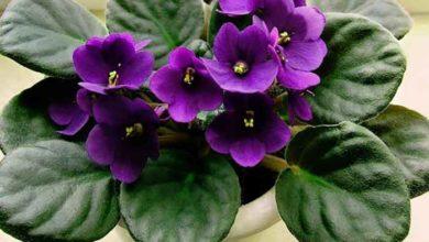 Photo of Tine minte! Aceste plante de interior vor aduce fericire si dragoste familiei tale