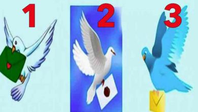 Photo of Alege un porumbel si afla ce mesaj are pentru tine! Vin zile fericite sau grele?